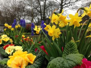 The Blooms of Horsforth