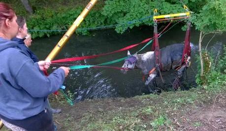 Teabag is rescued in Bingley